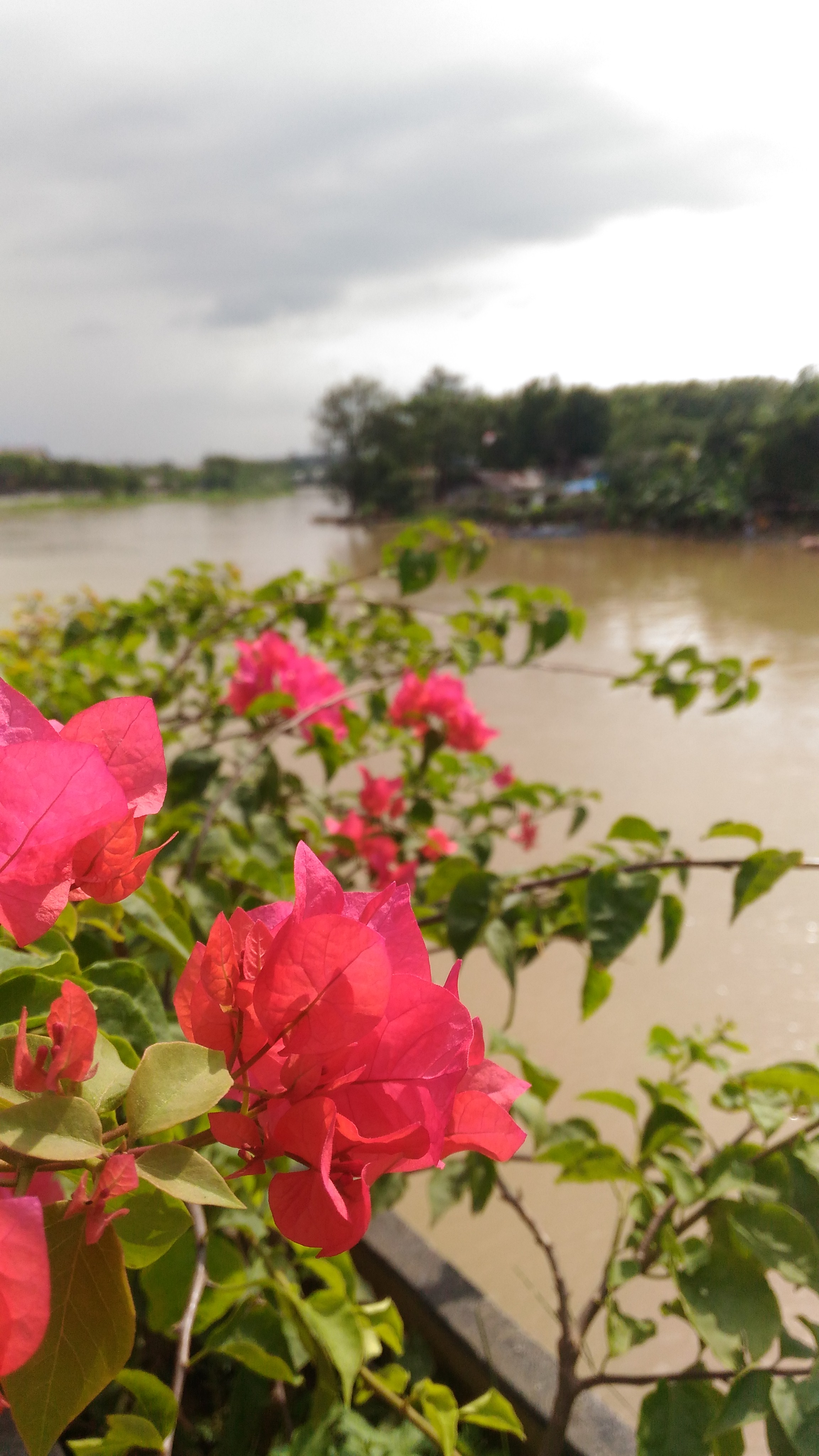 view sungai cisadane dari taman gajah